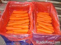 Свежие моркови