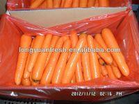 свежая морко...