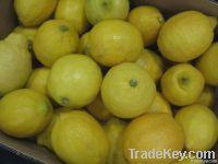 Eureka 신선한 레몬