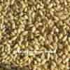Australian organic pearl barley