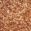 Sell roasted buckwheat kenels, fresh and dried buckwheats