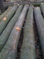 Sell Red Oak Logs-Alpawood