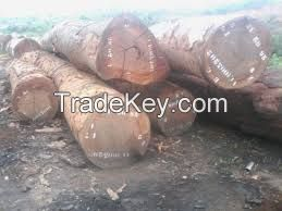 Quality timber logs and sawn woods