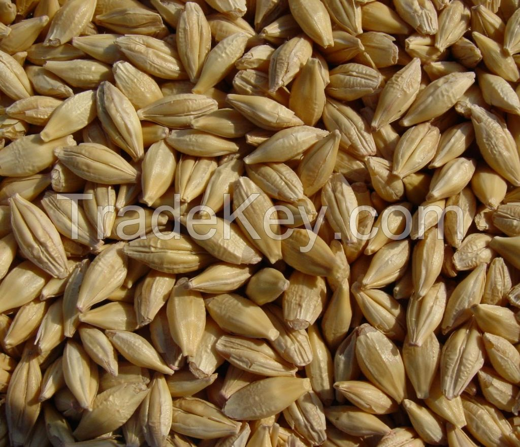 Grains, pulses and oil seeds