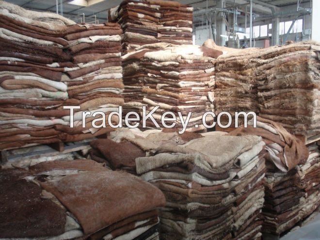 Dry and Wet Salted Donkey/Goat Skin /Cow Hides