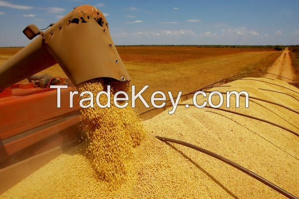 Brazilian Soybeans