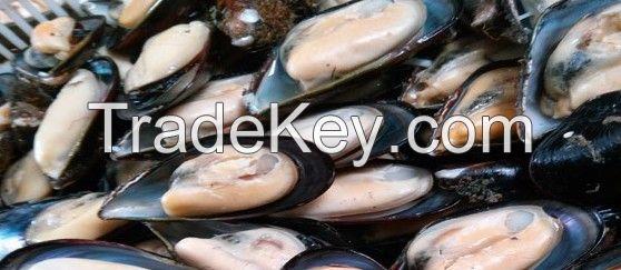Seafood Shellfish Frozen Half Shell Mussel