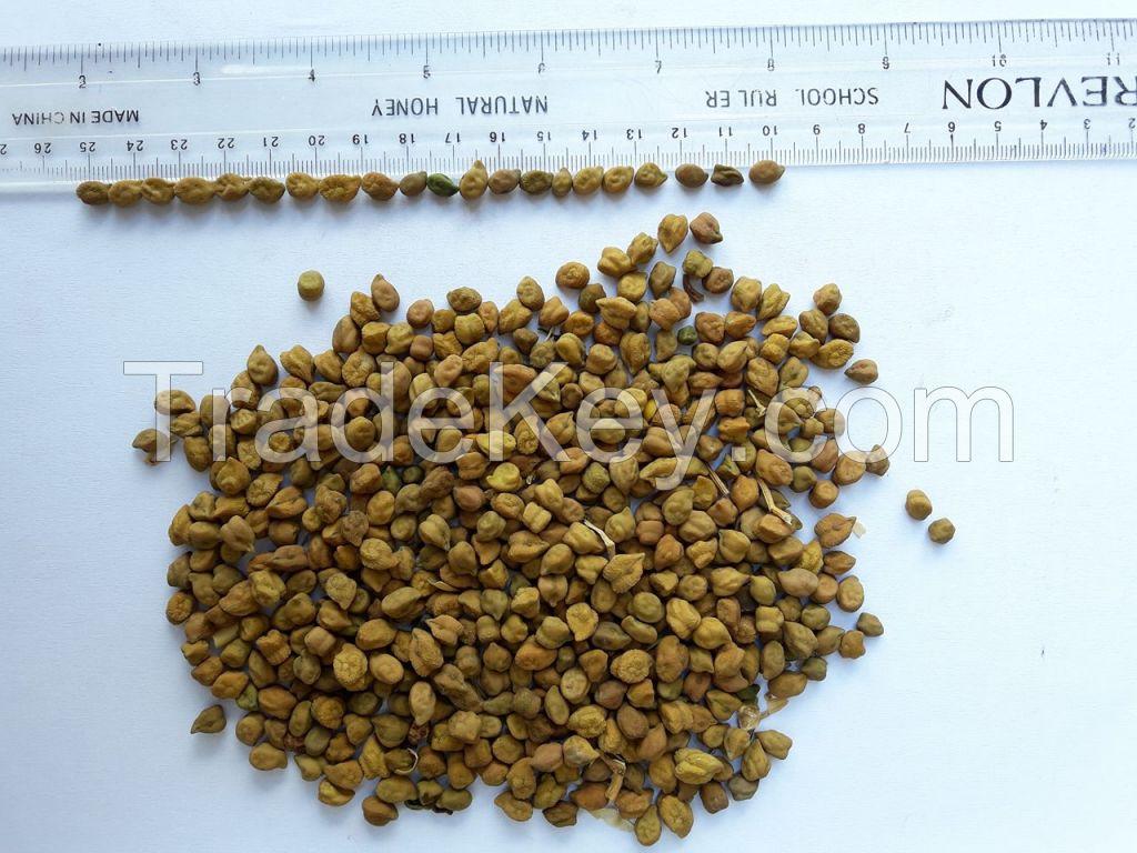 Chick peas Tanzania origin