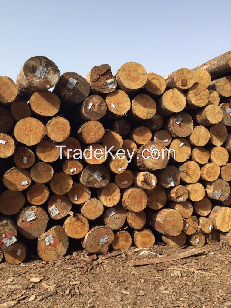 Wood Logs/ Timber