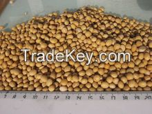Soybean, green beans, black beans with cheapest price