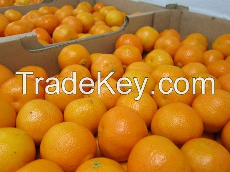 Sweet Fresh mandarin orange/Fresh Orange, Naval Orange, Valencia Oranges