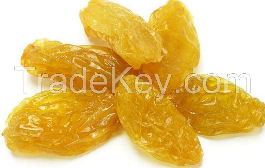 Raisins | Raisins Supplier |  Raisins Exporters