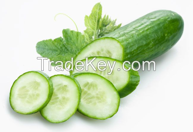Vietnam Fresh Cucumber