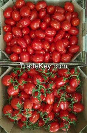Tomatoes red plum-shaped