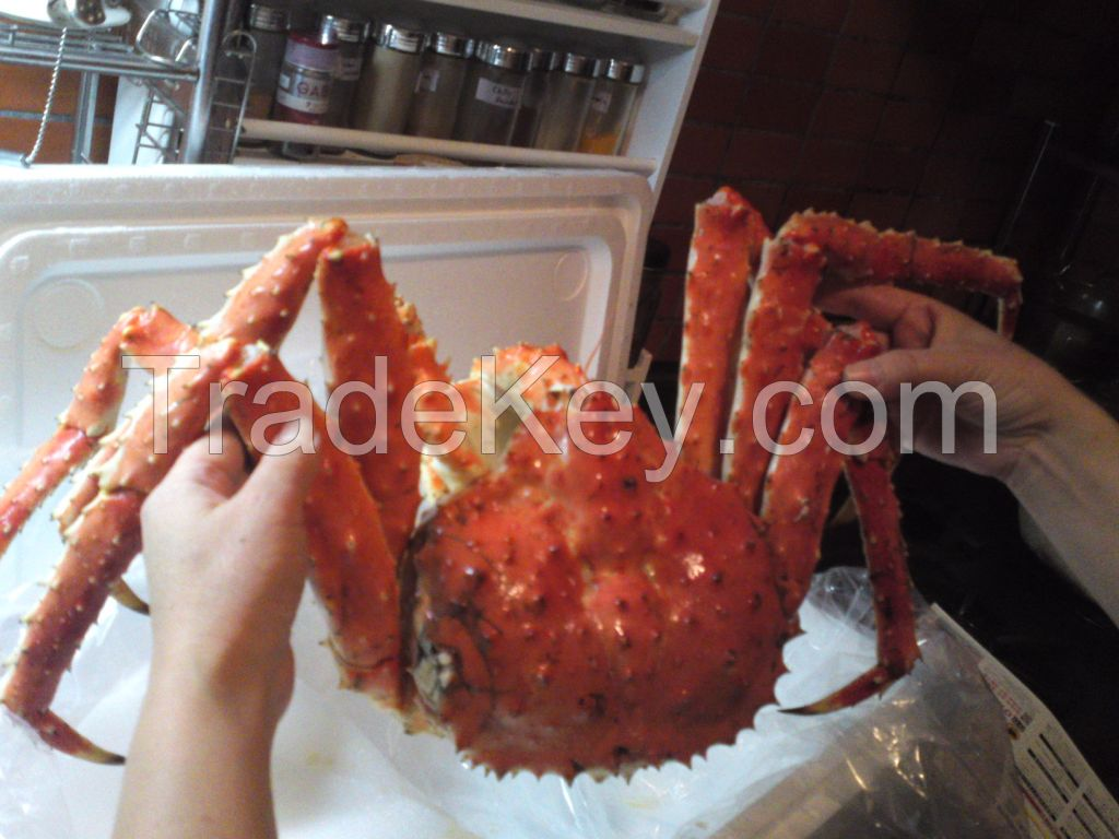 Live Red King Crab/ Red King crab legs  / Live Norwegian King Crab