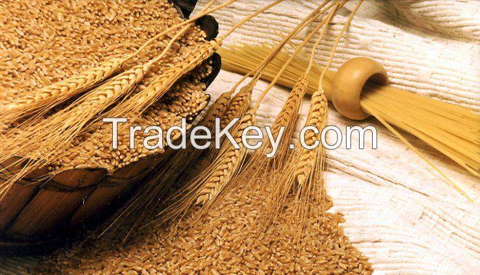 Hard Durum Wheat NON GMO