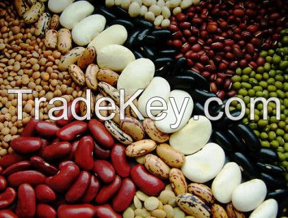 Red Speckled and Light Speckled Kidney Beans / Sugar Beans for sale