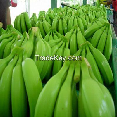 Banan Cavendish