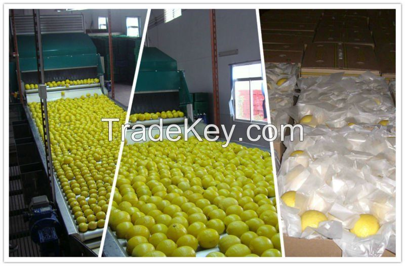 Eureka Lemon, Fresh Lemon, Anyue lemon