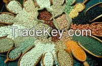 Light Speckled Kidney Bean(White Kidney Beans, Long Shape)Purple Red Speckled Kidney Beans, Coffee Beans, Black Beans, Soya Beans, Mung Beans