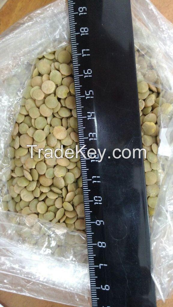 Yellow peas, green lentils of Russian origin