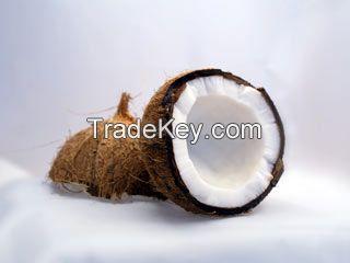 Organic Coconut Freeze-dried Powder