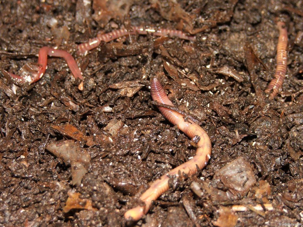 Vermicompost: best organic fertilizer