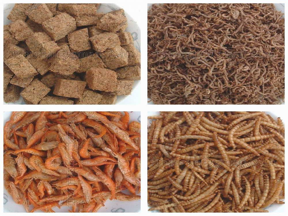 Freeze dried sun dried shrimp blood worms fish food by for Bloodworms for fish