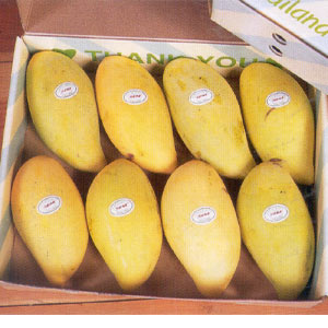 Fresh Mangoes, Excellent Quality Pakistani Mangoes