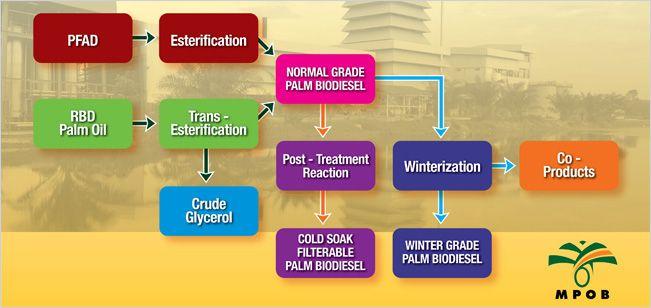 biodiesel in malaysia