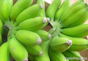 Dwarf Bananas