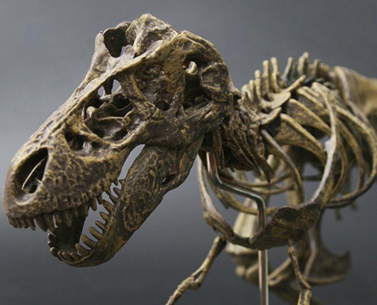 Dinosaur Skeleton Model Jigsaw Block Puzzle