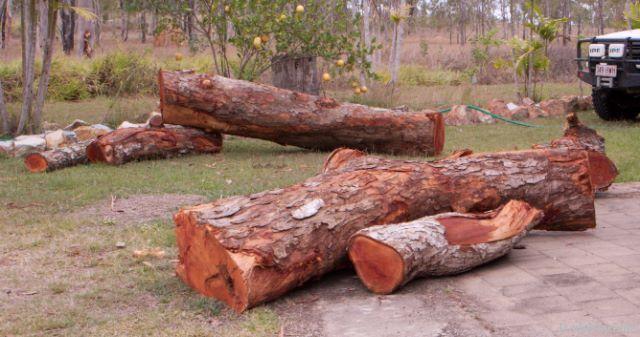 Red cedar Logs