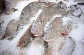Frozen Fish ( Tuna, mackerel and others ).