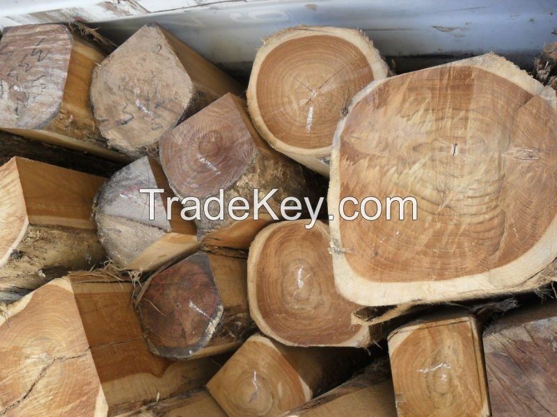 Timber Logs and Lumber