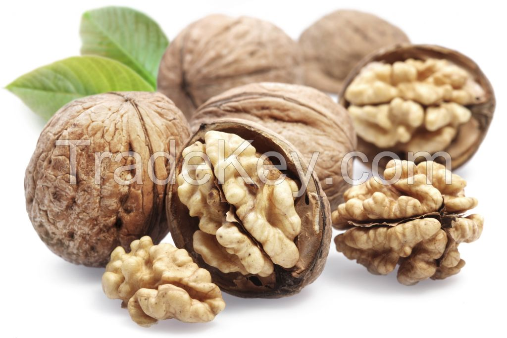 Walnuts in shell or kernel so good quality and cheap price