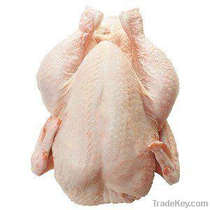 Export Chicken Paw | Chicken Feet Suppliers | Chicken Paw Exporters | Chicken Feets Traders | Processed Chicken Paw Buyers | Frozen Chicken Paw Wholesalers | Low Price Freeze Chicken Paw | Best Buy Chicken Paw | Buy Chicken Paw | Import Chicken Paw | Chic