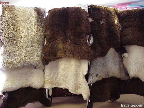 Wet Salted Sheep Skins