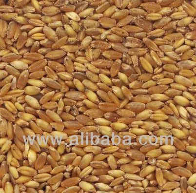 Wheat | Wheat exporter | Wheat distributor | Wheat wholesaler | Wheat supplier | Wheat importer |  Wheat |Wheat for sale | long grain Wheat exporter | buy Wheat online | Wheat for sale |  Wheat exporter | Wheat wholesaler | long grain Wheat buyer |  Wheat