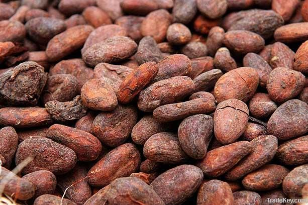 Best Quality Roasted Cocoa Beans