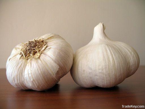 Fresh Garlic | Dried Garlic