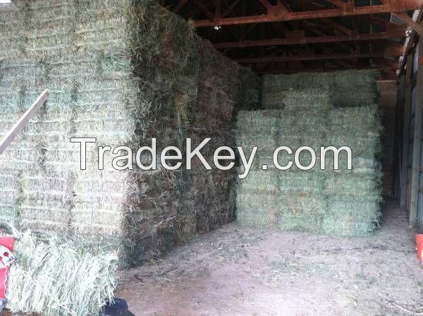Alfalfa Hay, Rhode Hay, Oats Hay Bales