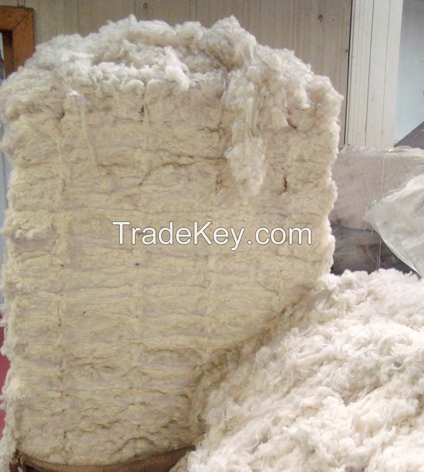 Greasy, Scoured Sheep and Lamb Wool