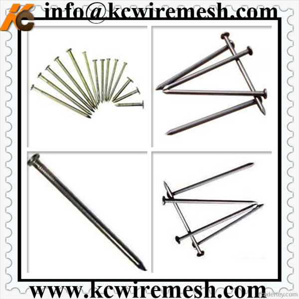 Polish&galvanized common nail/iron nail for construction, woodworking .