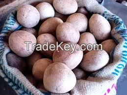 High  quality  Fresh dried coconut