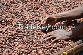 cocoa beans, cocoa powder, cocoa cream, cocoa oil, cocoa shell, cocoa seedlings