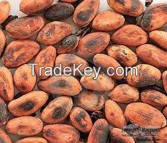Cameroon Cocoa Bean