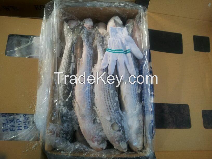 Frozen Grey mullet whole round