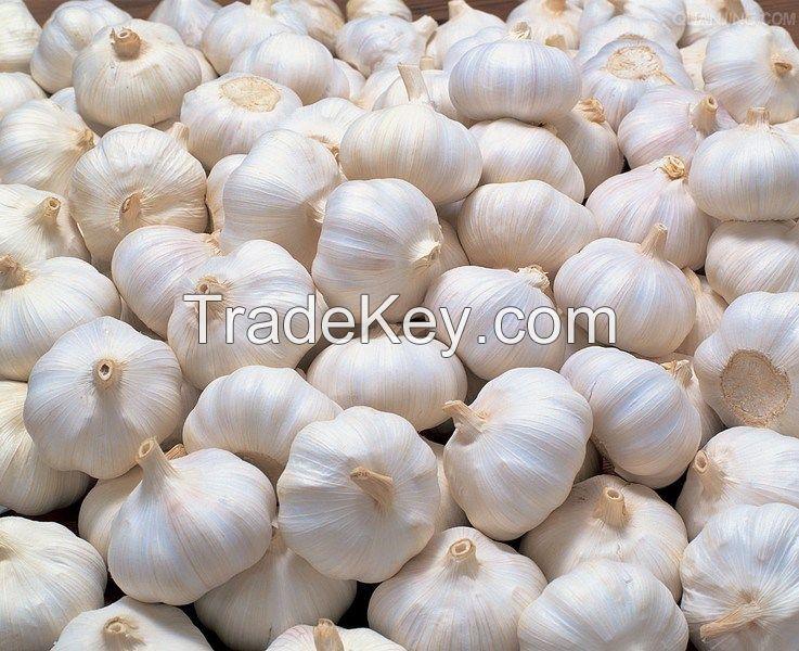 Fresh Garlic - new arrival, hot sales