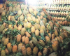 Fresh Sumatra Pineapple